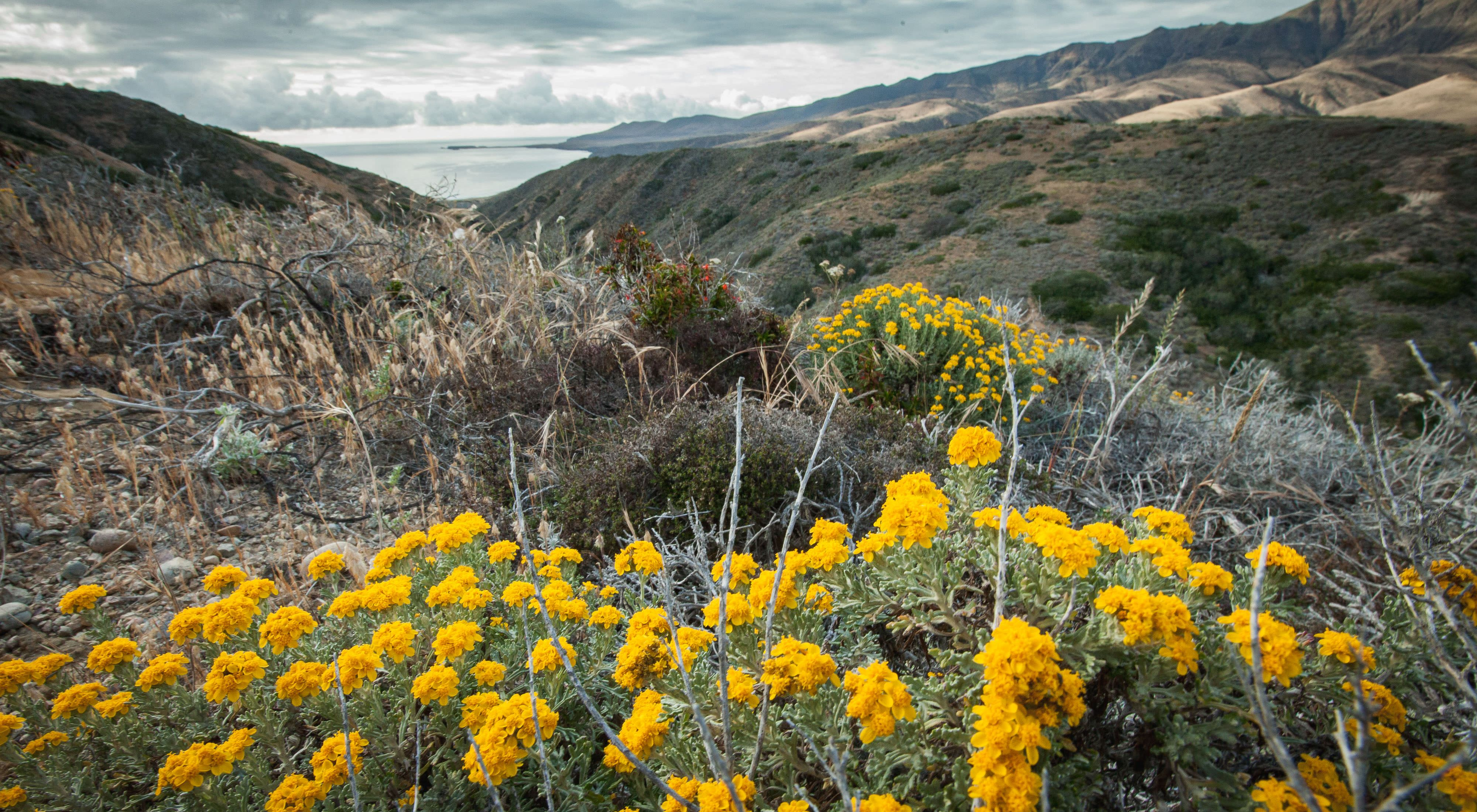Twenty-five miles off the coast of southern California lies Santa Cruz Island, the largest of California's eight Channel Islands.