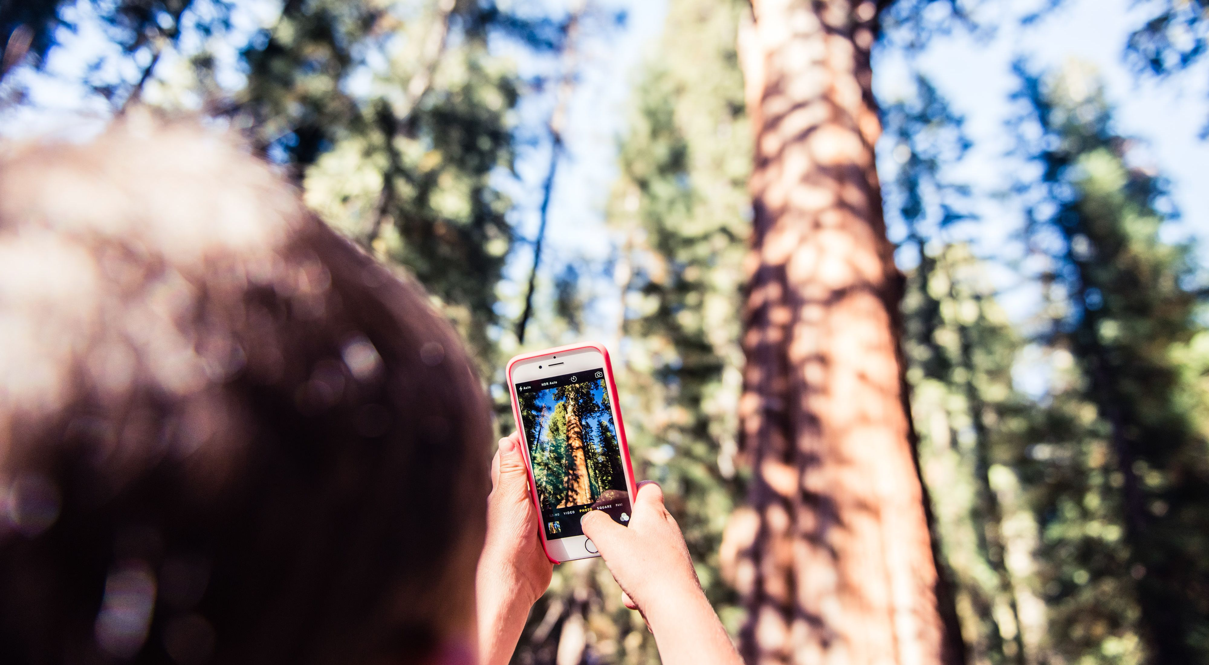 boy with cell phone photography giant sequoia