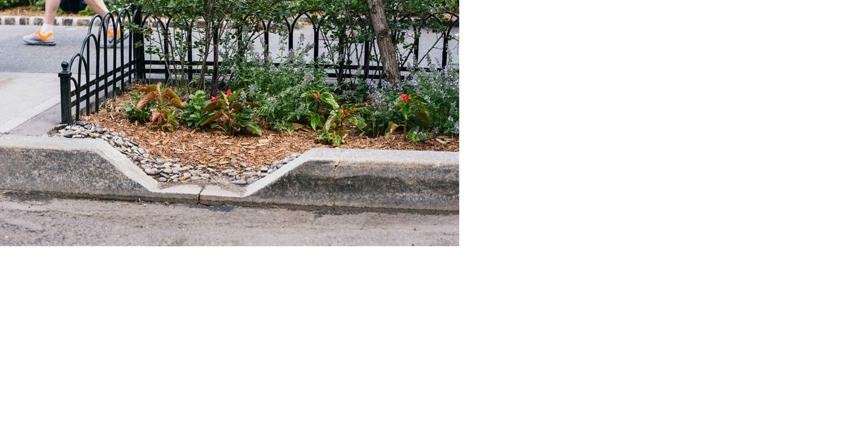 a curb with mulch and plants on a city street
