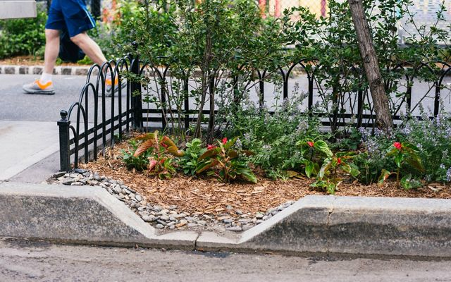 curb with plants and small bushes