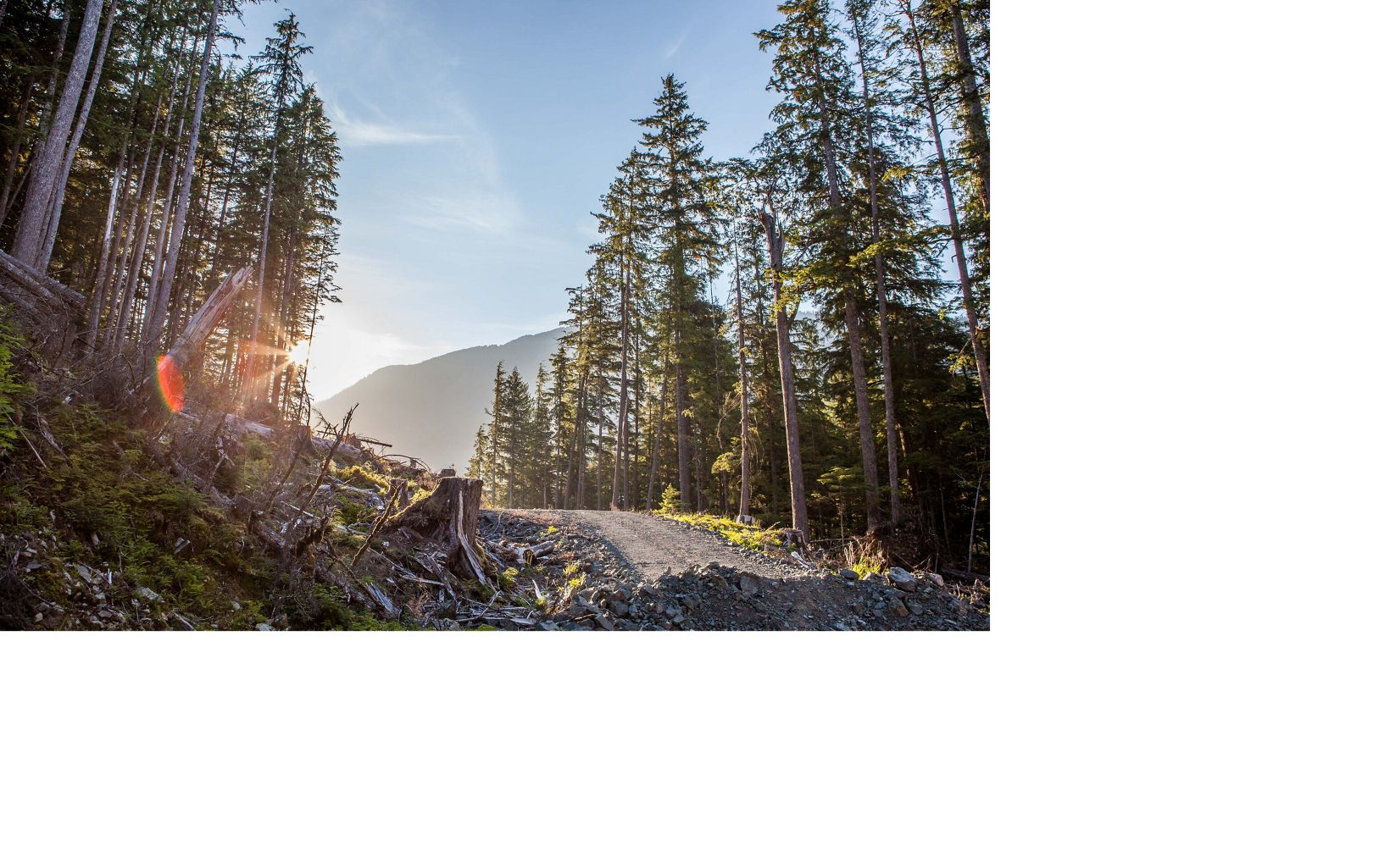 Clear-cutting in Tongass National Forest on Prince of Wales Island, Alaska.