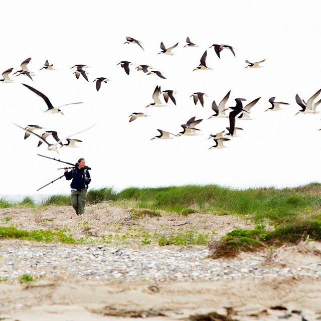 Shorebirds fly over a woman walking on the beach.