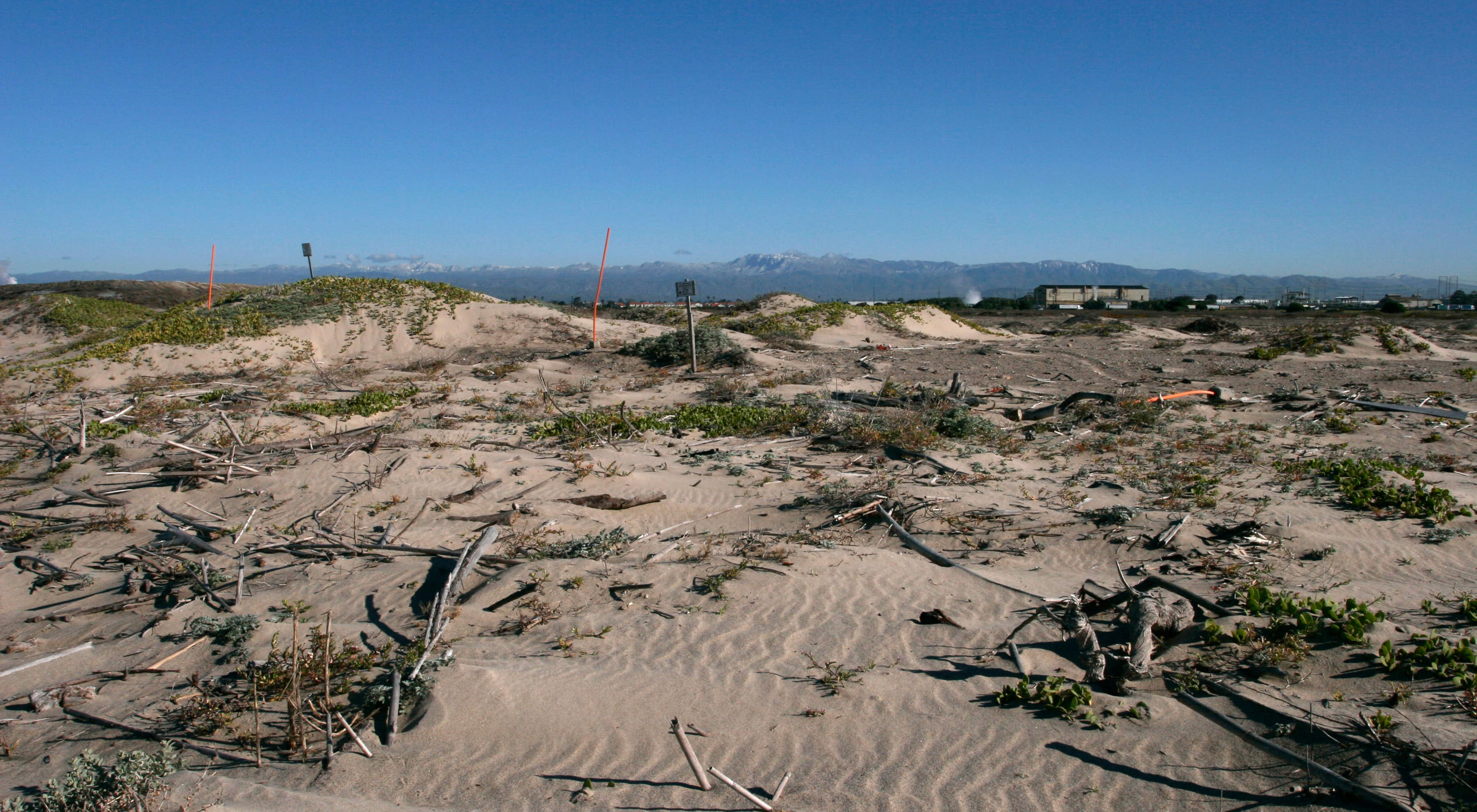 Northeastern view of the front dunes at Ormond Beach, a protected coastal wetlands area and bird nesting site in Ventura County, southern California.