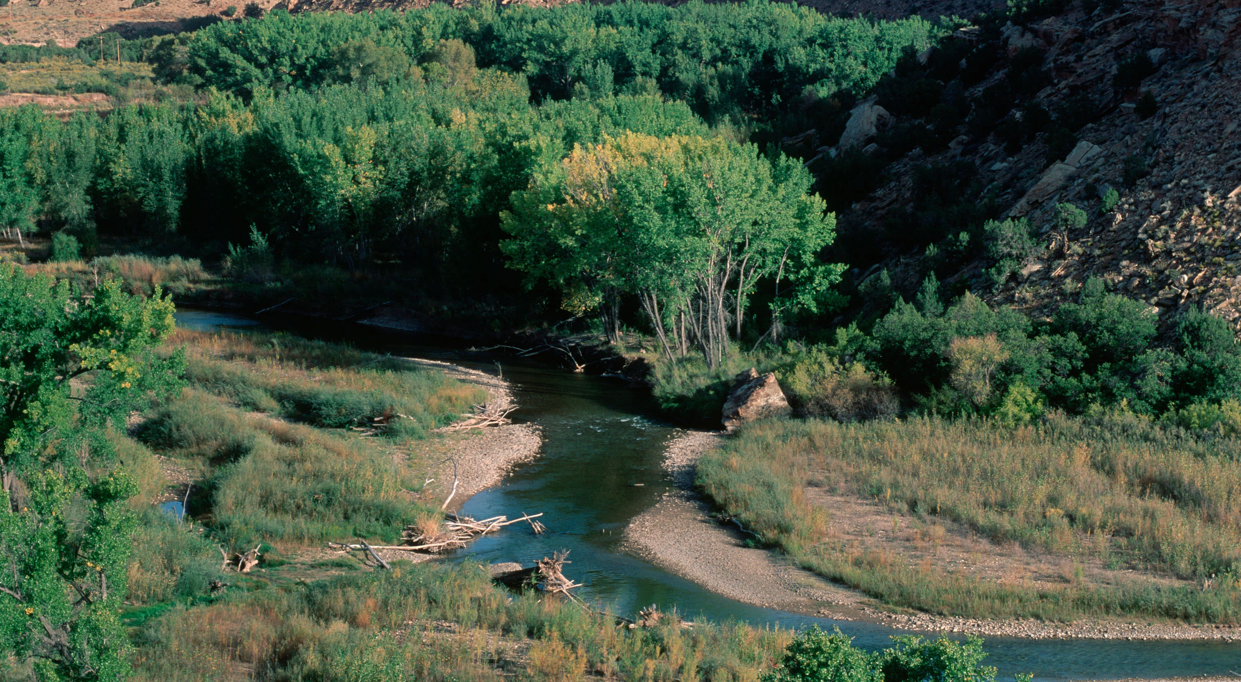 A river meandering through trees and sandy, grassy banks.