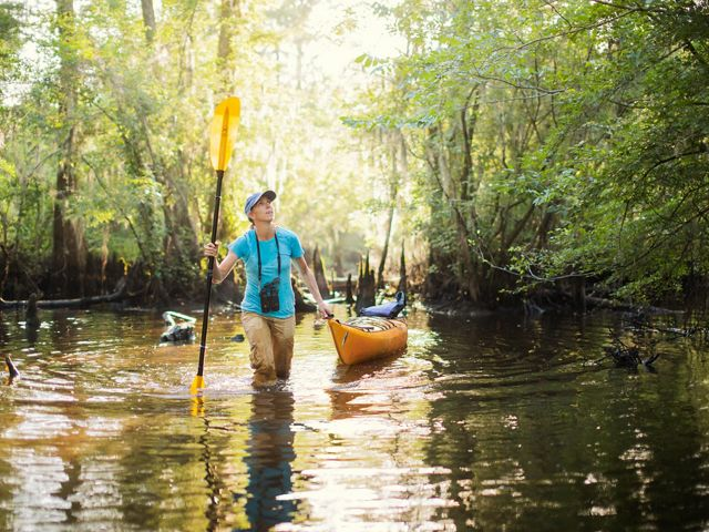 A woman walks through a cypress swamp pulling a kayak behind her.