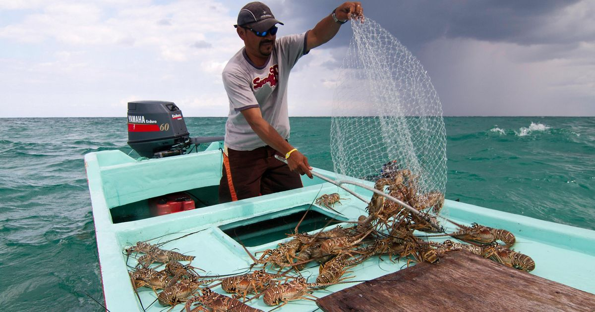 A fisherman wearing a hat and sunglasses pulls a net fu
