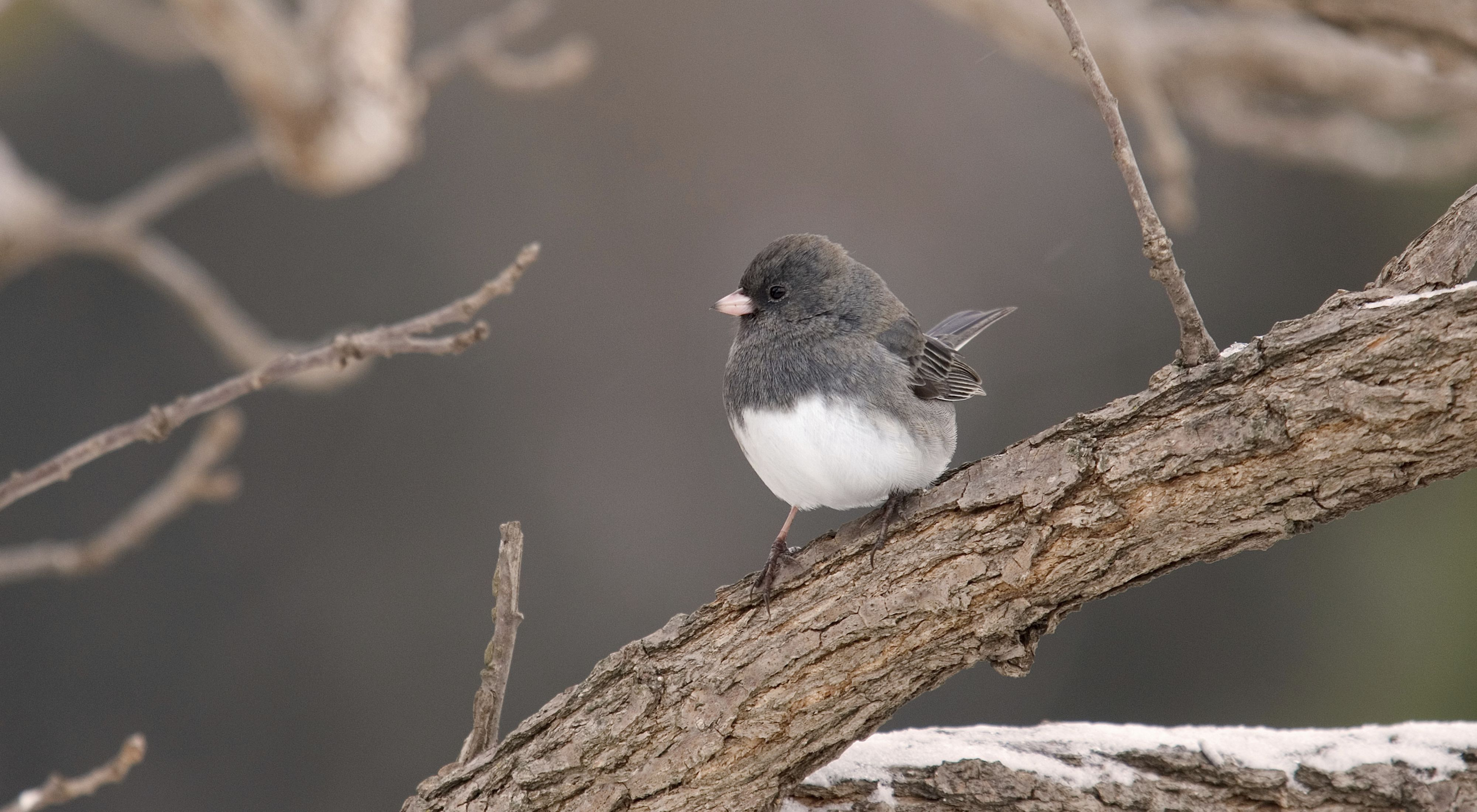 A small gray bird sits on a branch.