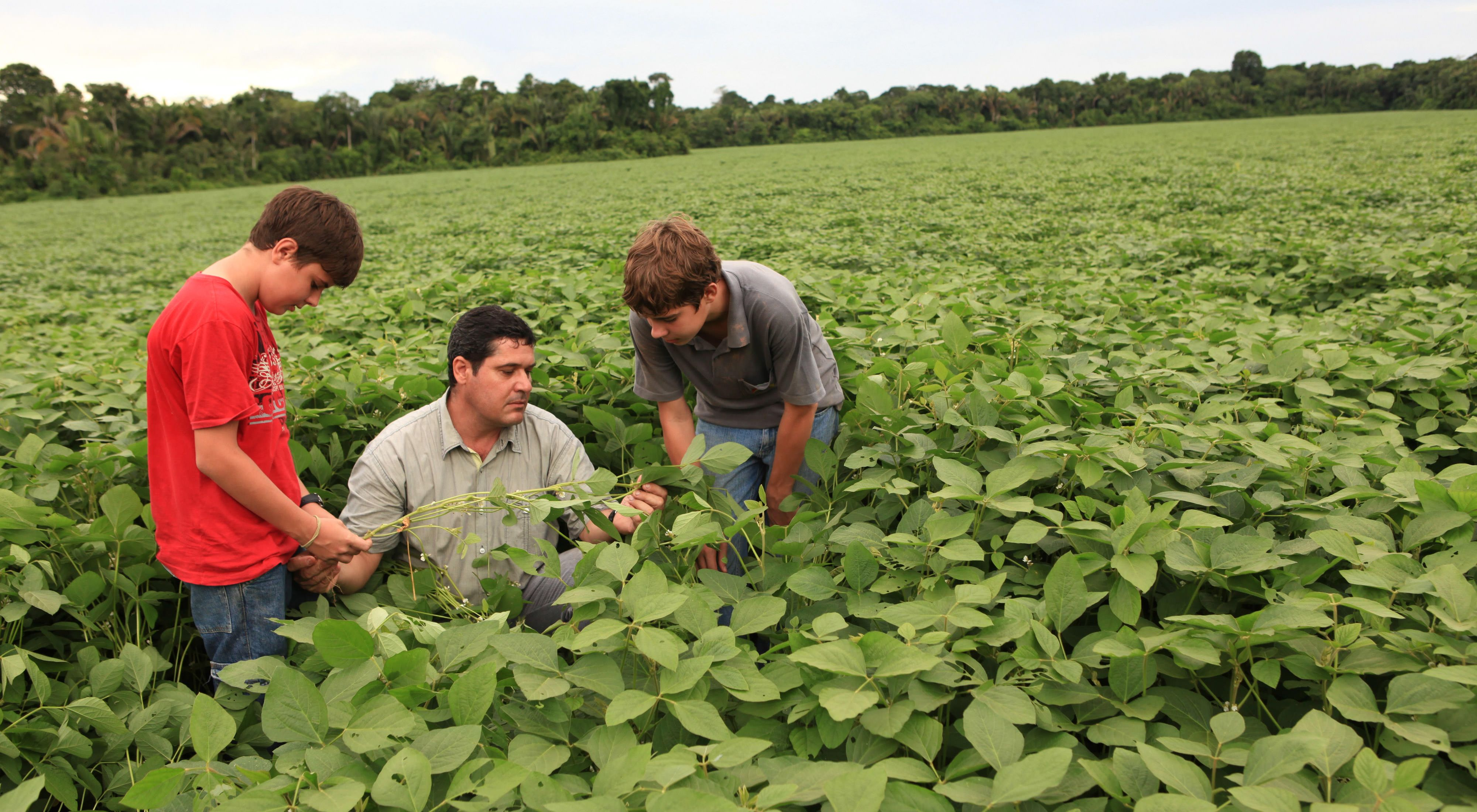 A man and two boys in a field look at their crop.
