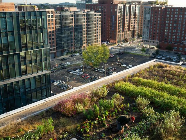 A small garden on a rooftop overlooking other buildings and a parking lot.