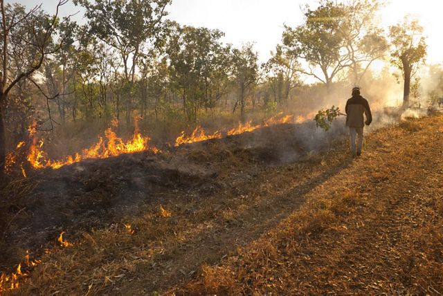 A controlled burn of savanna woodlands carried out by indigenous people on the Fish River Station in northern Australia.
