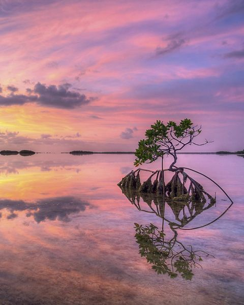 Sunset over the still waters and mangroves of the National Key Deer Refuge, Florida Keys.