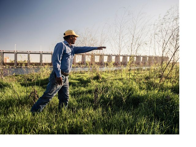 Juan Butron examines new willow saplings that have shot up since the Pulse Flow event in the Spring of 2014. The Morelos dam behind him marks the border between the USA and Mexico and diverts 1.55 million acre feet of the Colorado River into Mexican irrigation canals, supplying water to farmers in the Mexicali Valley as well as to the municipalities of Mexicali, Tijuana and Tecate.