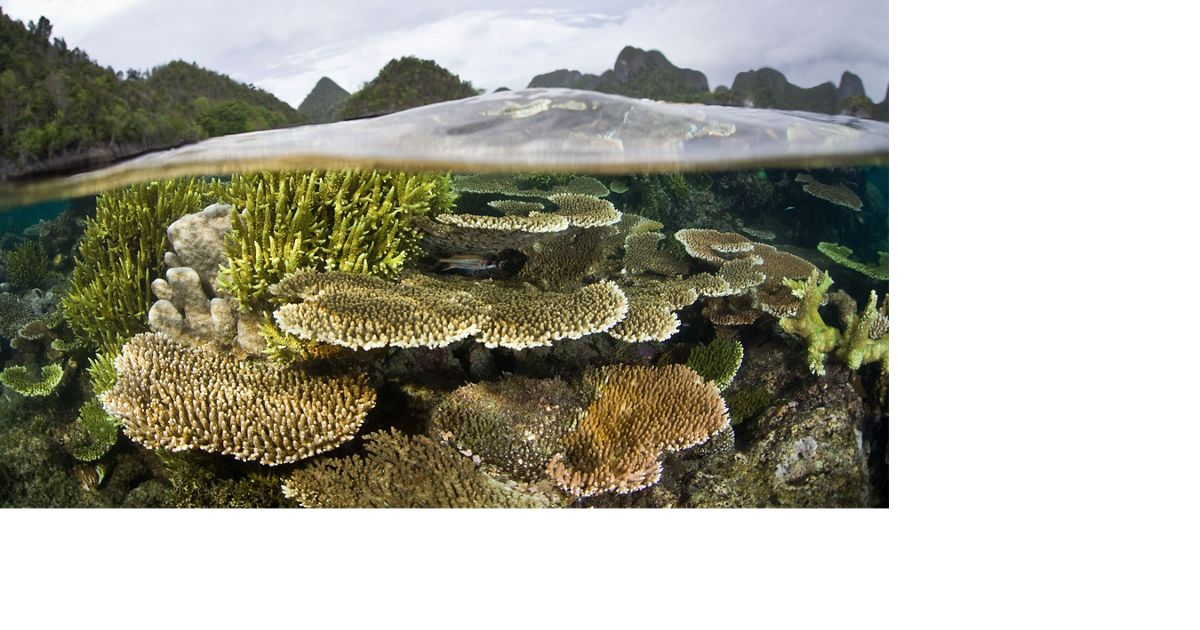 surround a sheltered lagoon where hard corals grow within centimeters of the low tide line. Wayag, Raja Ampat, Papua, Indonesia, Pacific Ocean.