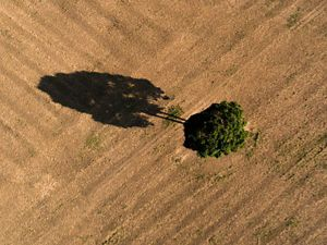 Arial view of a tree in a field