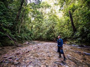 An Indonesian man stands in a shallow stream and looks up to the surrounding forest.