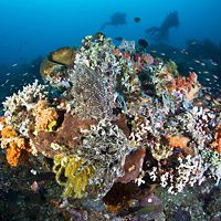 A diversity of corals, echinoderms, sponges and other life compete for space and plankton on the reefs surrounding Bangka Island, North Sulawesi, Indonesia, Pacific Ocean.