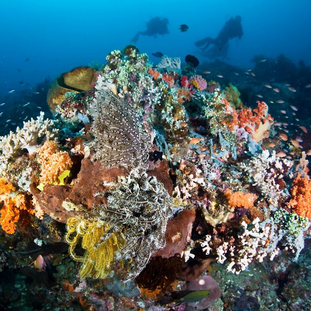 A diversity of corals, echinoderms, sponges, and other life compete for space and plankton on the reefs surrounding Bangka Island, North Sulawesi, Indonesia, Pacific Ocean.