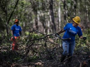 Three young people wearing hard hats and conservation corps shirts, clearing branches in a forest.
