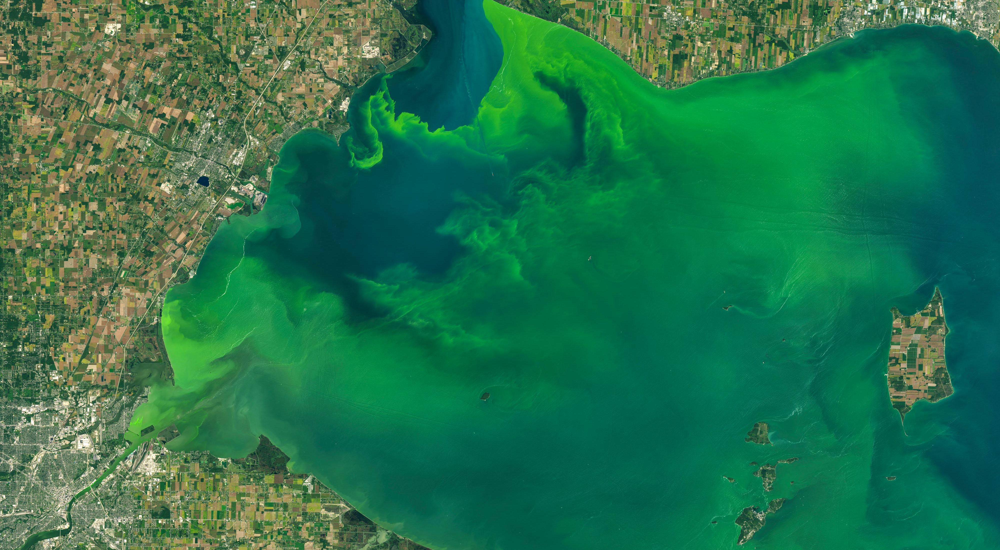 Algal bloom in the western basin of Lake Erie.