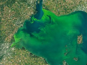 Algal bloom in the western basin of Lake Erie.