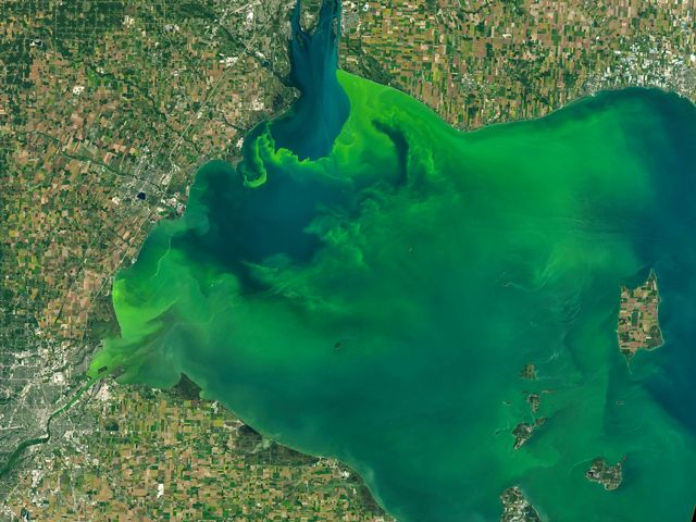 An aerial view of the Western Lake Erie Basin with the green algal bloom spreading across the blue waters.