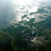 aerial view of a wetland