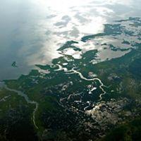 Aerial view of Chesapeake Bay wetlands