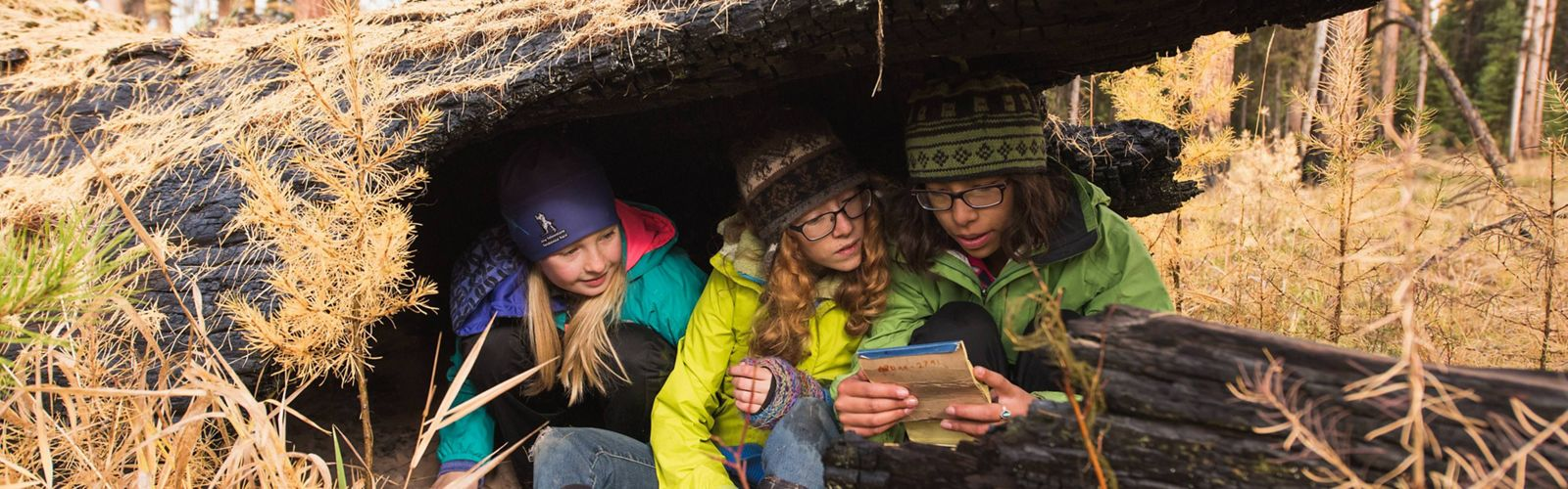 Kids reading in a hollow log
