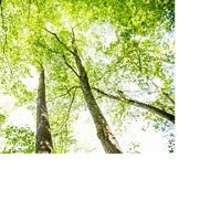 The forest in First State National Park near Wilmington, Delaware.