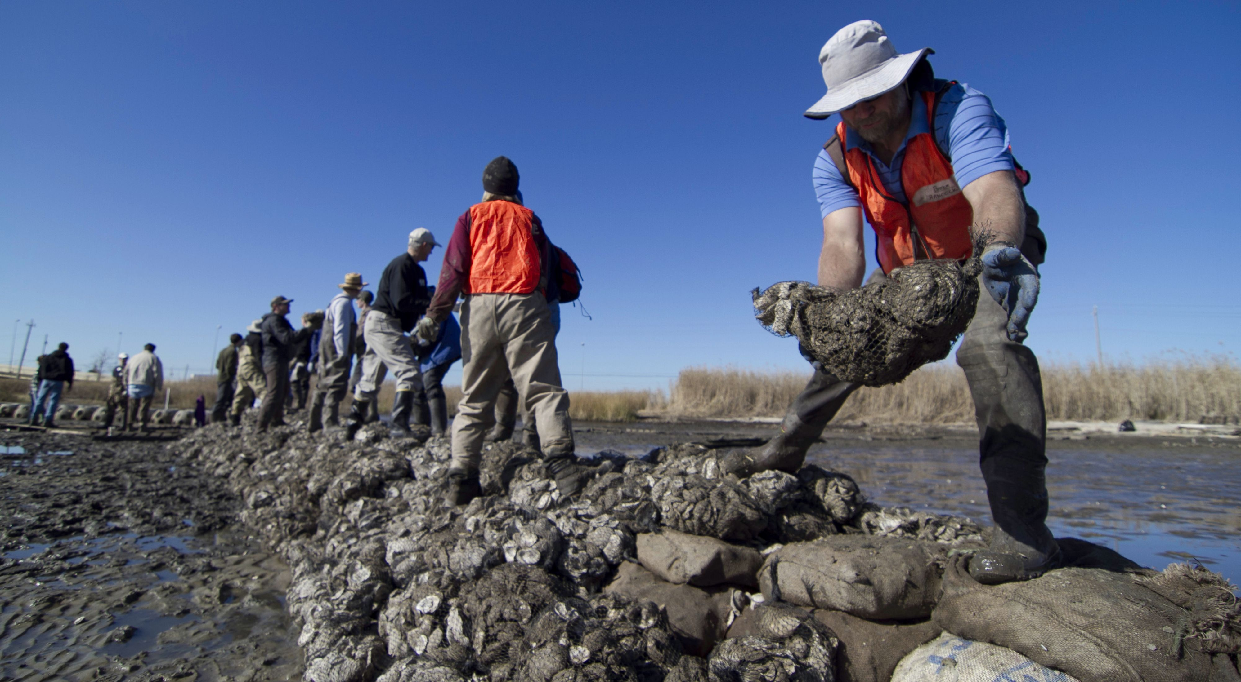 Volunteers in hip boots form a chain to pass oyster reef material in Alabama's Mobile Bay in a reef restoration project.