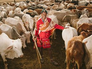 A herder watches over his cattle at Lewa Wildlife Conservancy in northern Kenya.