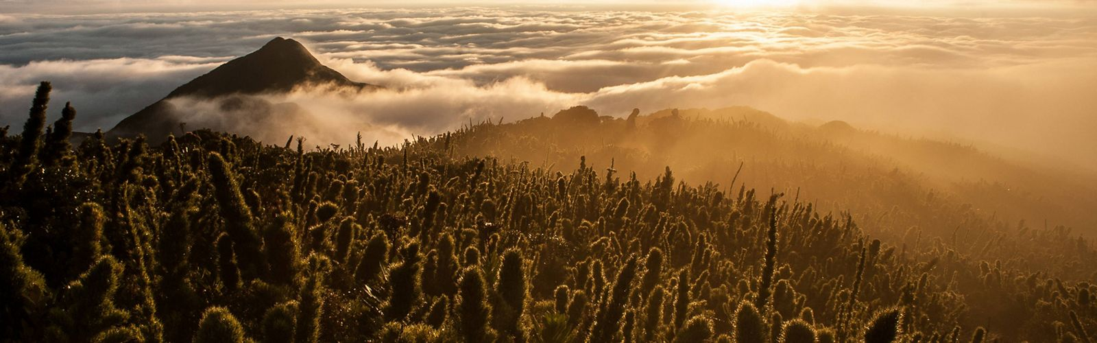 Sunrise above the high fields Caratuva, the south of Brazil's second highest mountain..