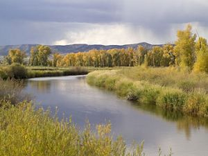 A mix of fall flora and Cottonwoods in the wetlands of the Yampa River basin on The Nature Conservancy's Carpenter Ranch, west of Steamboat Springs, Colorado.
