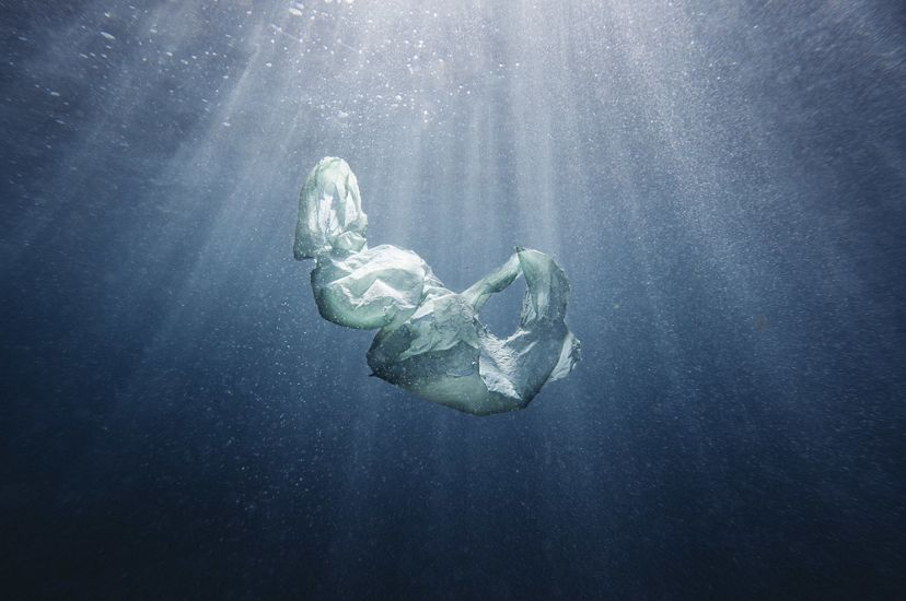A plastic bag floating just under the surface of the ocean in Australia.