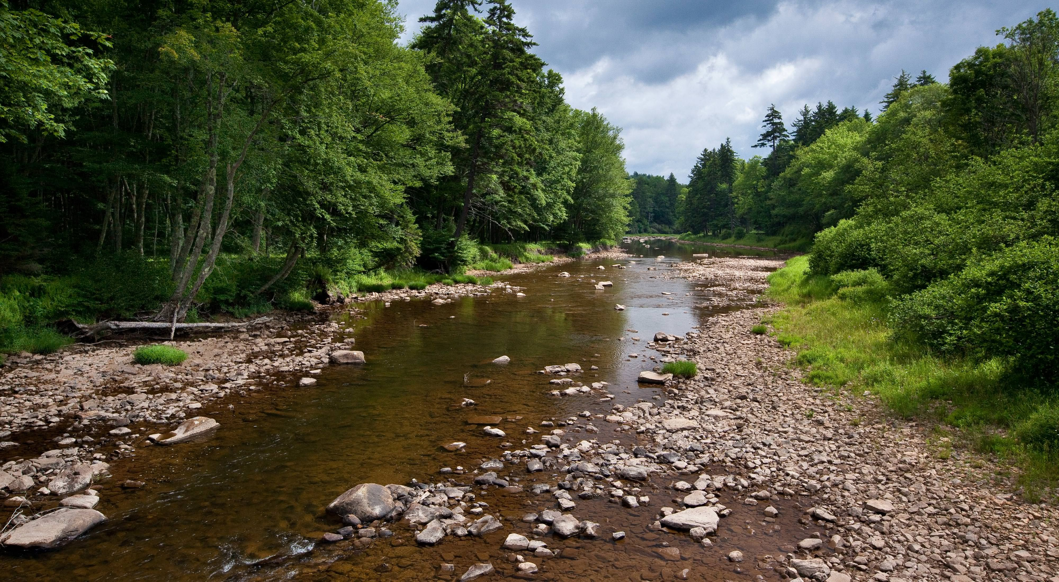 The Upper Shavers Fork Preserve is located along the banks of the Cheat River at the center of the 40-mile long high elevation watershed that is the heart WV's spruce forest.