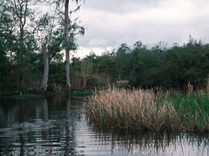 Three Mile Creek in Mobile-Tensaw River Delta in Alabama of the United States. The Conservancy has teamed up with partners like the State of Alabama Forever Wild Program and Ducks Unlimited to preserve over 47,000 acres in the Delta to protect the habitat of 67 rare, imperiled, threatened or endangered species that live there.