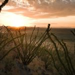 A low sun sheds some light on distant mountains, a desert valley, and backlit desert plants in the foreground.