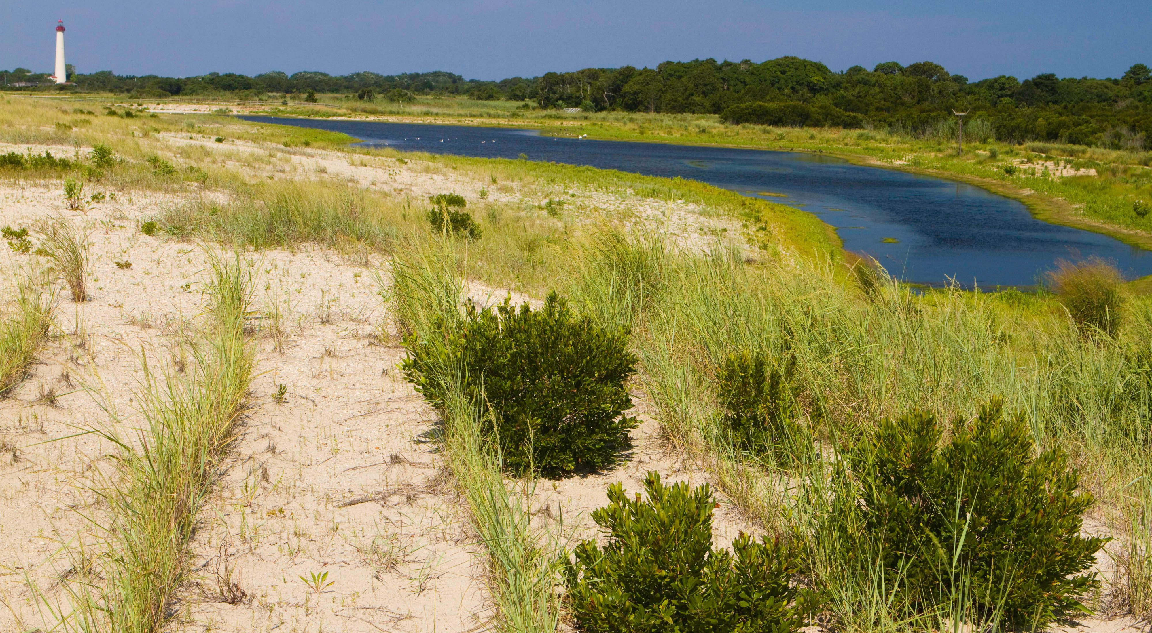 Grassy dunes and a lagoon at South Cape May Meadows Preserve.