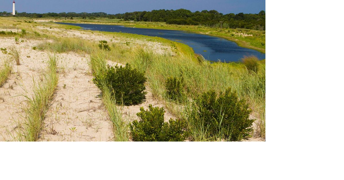 South Cape May Meadows Preserve