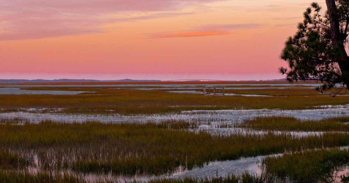 The Nature Conservancy in South Carolina