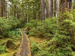 Boardwalk trail in Tongass National Forest