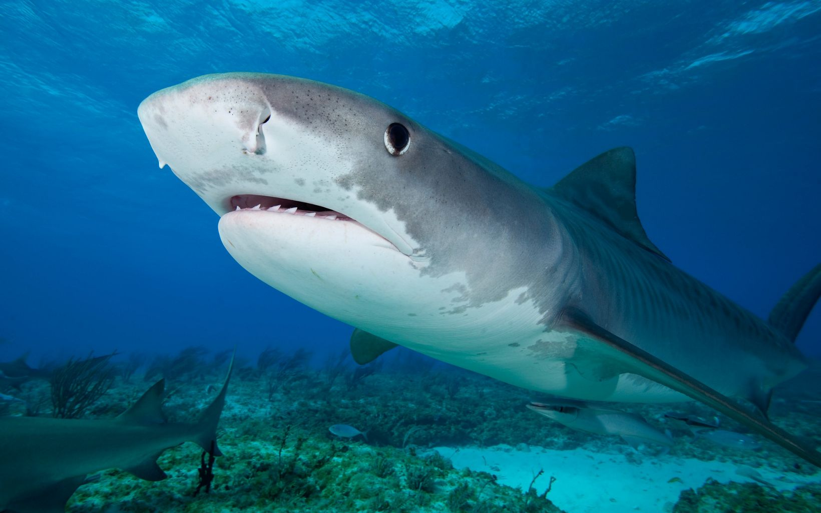closeup of  a shark head with a slightly open mouth underwater