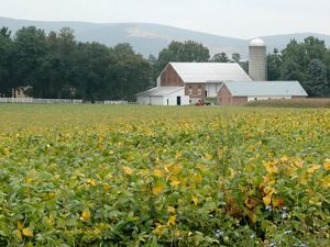 A mountain ridge rises behind a large barn with a tin roof and tall grain silo. A field full of green crops spreads across the foreground growing right up to the edge of the barn.