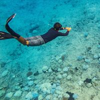snorkeling over coral
