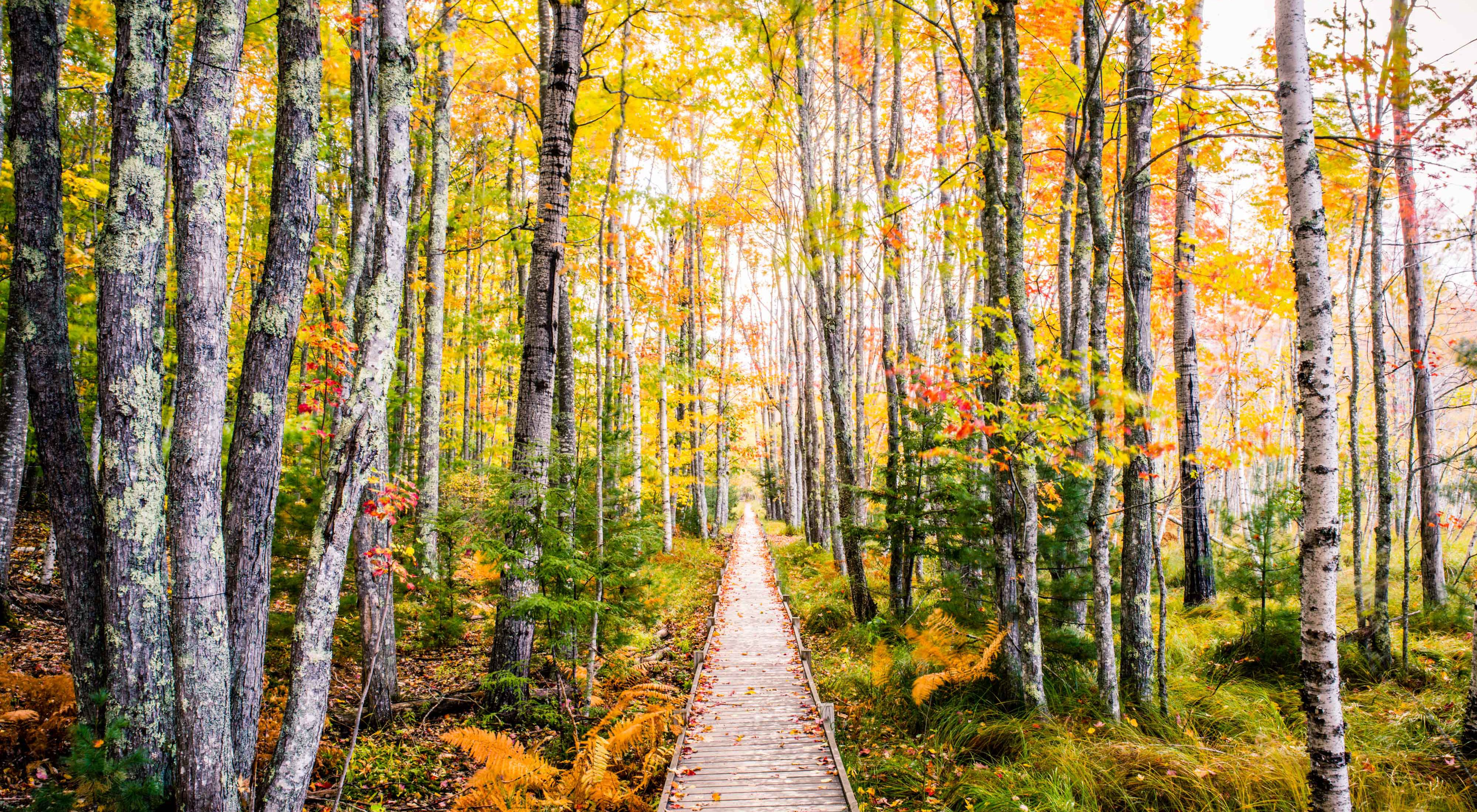 Photo of a path in a forest in autumn colors.