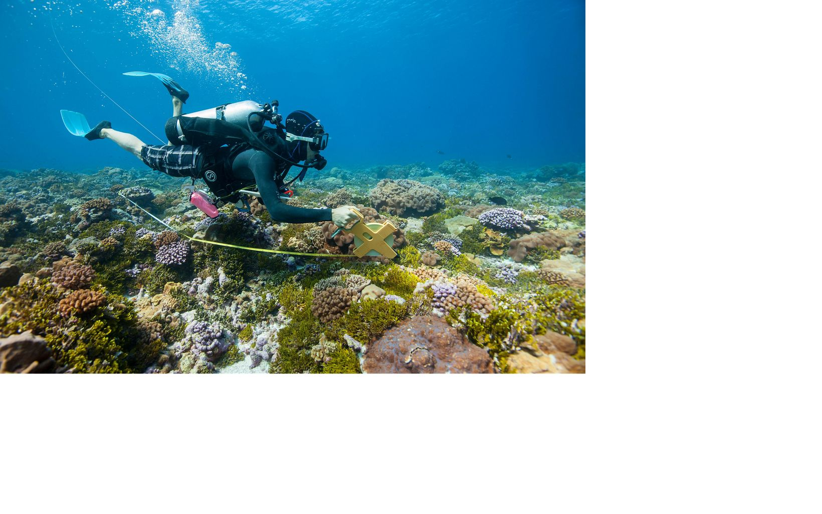 NC researcher, Meaghan Johnson studies Perfection Reef, the site of elkhorn coral outplanting by The Nature Conservancy in Dry Tortugas National Park.