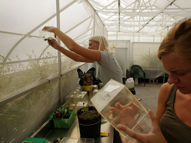 Two people in a greenhouse at the Toledo Zoo study captive-raised karner blue butterflies.