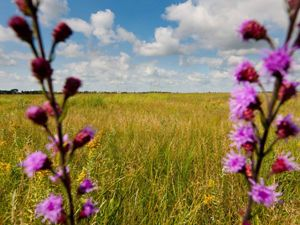 The preserve is the first property acquired through the Conservancy's Minnesota Prairie Recovery Project, funding was provided by the Land and Legacy Amendment.