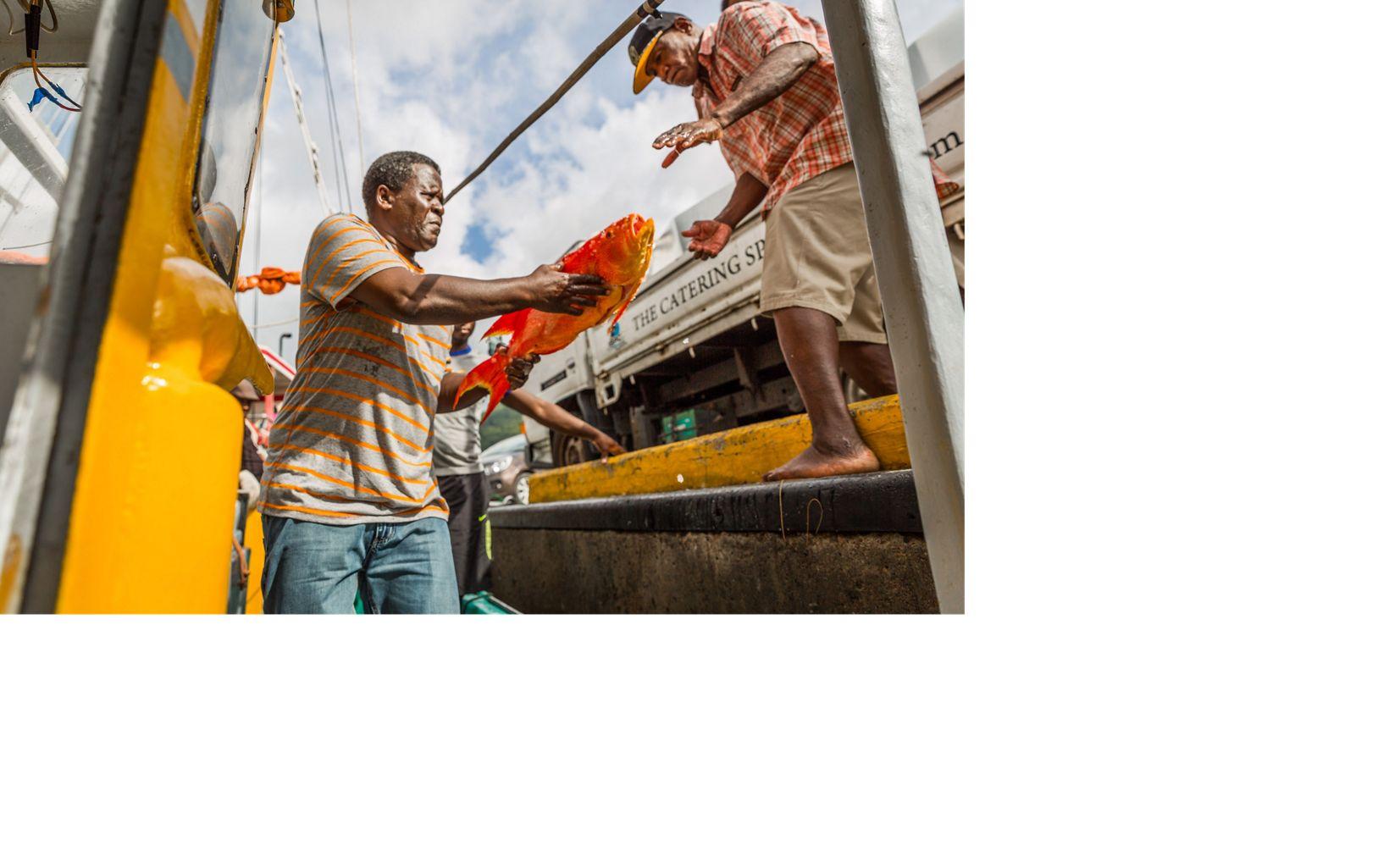Jean de Dieu Leonel, captain of the Felicite, unloading unidentified bottom fish from the Felicite, Seychelles.