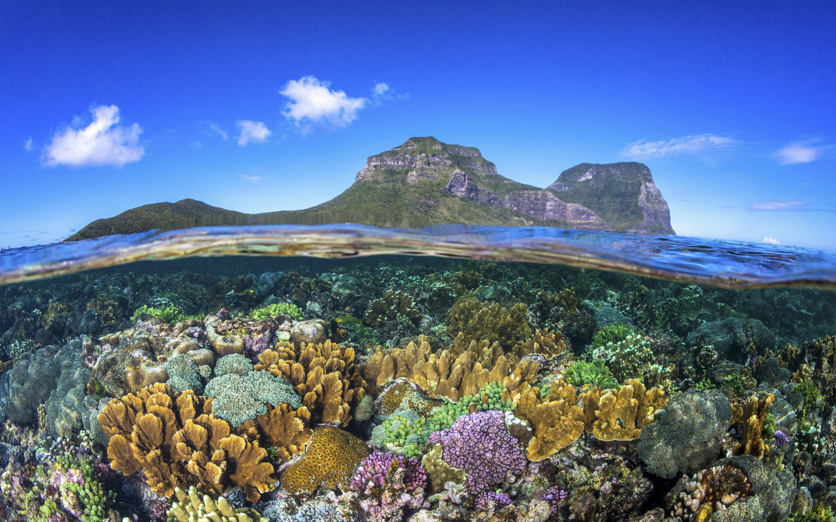 Healthy coral in the lagoon below Mount Gower and Mount Lidgbird on Lord Howe Island.